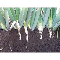 土を盛って、白身を伸ばします。
